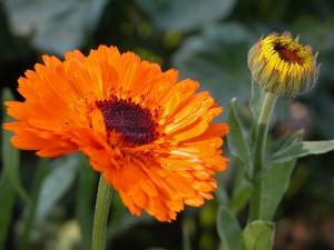 Aromath rapie apaiser un coup de soleil au naturel - Comment eviter de peler apres un coup de soleil ...