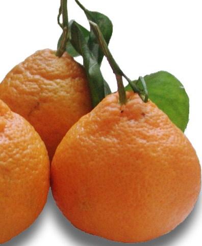 essence de mandarine pour dormir