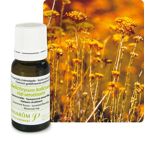 L'huile essentielle d'immortelle ou hélichryse italienne