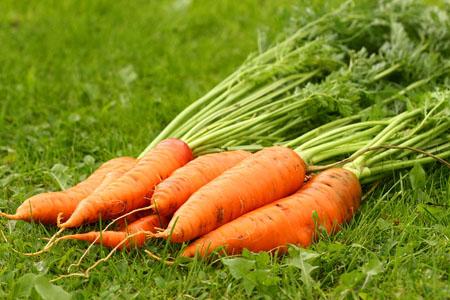La carotte : un bienfait pour la peau !