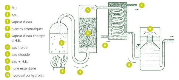 De l'eau transformée en vapeur sous pression passe dans les plantes pour extraire les molécules aromatiques
