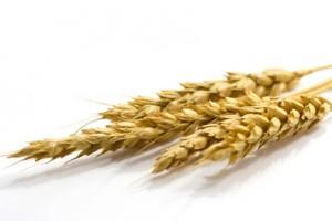 Les cheveux de sont pas allergiques au germe de blé ;-)